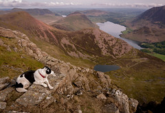 20/52  Dog with a View (JJFET) Tags: 20 52 weeks for dogs elk red pike high stile crummock buttermere border collie dog sheepdog