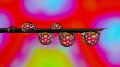 Multicolor - 3218 (YᗩSᗰIᘉᗴ HᗴᘉS +6 500 000 thx❀) Tags: multicolor color couleur drop drops droplet needle water h2o red macro hensyasmine