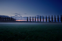 Approaching Night (clé manuel) Tags: fog nature landscape trees natur nebel mist haze wiese bäume meadow field grass green sky sunset sonnenuntergang after sony alpha a6000 6000 alley allee night nacht evening abend
