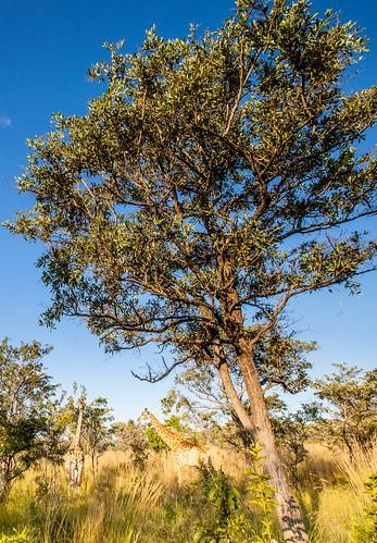 KrugerParkREIZ&HIGHRES-104