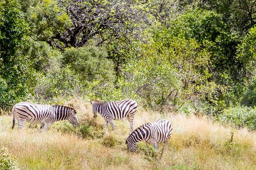 KrugerParkREIZ&HIGHRES-46