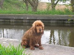 IMG_8395 (kassandrus) Tags: hiking wandelen netherlands nederland struinenenvorsen oude hollandse waterlinie