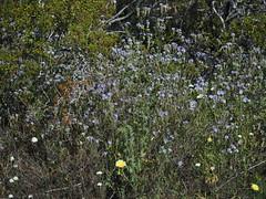 Q3266918 Joshua Tree National Park Wilson Canyon (ceztom) Tags: march 26 2017 wilsoncanyon whitetank joshuatree nationalpark