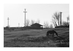 Countryside stories #2 (Florin Aioanei) Tags: countryside horse blackandwhite romania florin aioanei
