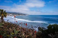 Laguna Beach (Vincen Chuang) Tags: california unitedstates pacificocean lagunabeach coast landscape 加州 美國 太平洋 拉古納沙灘 橙縣 orangecounty sony a7rii a7r2 zeiss loxia loxia2821