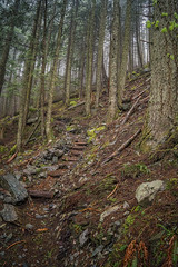Into the Hills (writing with light 2422 (Not Pro)) Tags: intothehills trees trail hiking hikingtrail hallpoint richborder rain fog washingtonstate landscape sonya77 forest