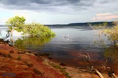 Amazon River (2) (Mahmoud R Maheri) Tags: amazonriver amazon amazonforest brazil manaus river water trees clouds blackwater rionegro reflection
