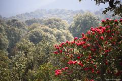 Rhododendrons (bNomadic) Tags: kartik swami temple garhwal uttarakhand pokhari rudraprayag karanprayag ganesha shiva himalayas himalayan panorama gangotri kedarnath badrinath kumaon ganga sacred hills mountains landscape travel bnomadic