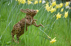 HOP (littlestschnauzer) Tags: bunny rabbit decoration easter egg hunt trail chatsworth april 2017 flowers spring daffodils hop uk wicker animal weaved