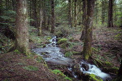 Small creek flowing into Alouette Lake (chris.baron) Tags: britishcolumbia river canada mapleridge nature fujixt2 spring trees water