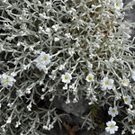 Nature 2 - Mount Parnitha thumbnail