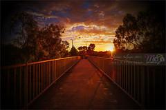 Werribee Sunrise DSC-8553 (fatima_suljagic) Tags: landscape fineartprints fatimasuljagicmelbourne photoprints canvasprints australia nature naturephotographer photographer photographermelbourne artstudiomaja