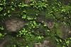 #wyanad#asummerescape (kirthika krishnan) Tags: wyanad asummerescape