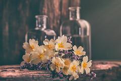 Wildflowers (RoCafe on/off) Tags: stilllife flowers 52stilllifes poetic bottles wild wood rustic romantic dark light nikkormicro105f28 nikond600 primulas limonium