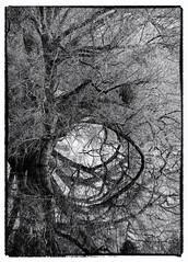 Unteres Odertal -2 (Sciurus vulgaris) Tags: brandenburg wandergruppe baum oder wasser spiegelbild spiegelung