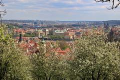Spring in Prague (paprtala) Tags: spring prague praha prag frühling वसन्त 春天 vår գարուն yaz udaberri pomlad жаз пружина bahor musimsemi pavasaris ressort האביב primăvară वसंत primavera пролеће gwanwyn jar