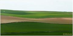 Glooiende heuvels (HP025806) (Hetwie) Tags: opaalkust sea hills grass cap kust gras gralsland strand france frankrijk coast cotedopale capblancnez capgrisnez zee sangatte hautsdefrance fr