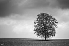 WRANFORD LONE TREE (mark_rutley) Tags: hampshire lonetree thelonetree singletree tree blackandwhite mono anseladams clouds minimal