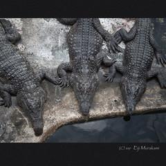 Palawan Wildlife Rescue and Conservation Center (Eiji Murakami) Tags: philippines palawan puertoprincesa olympus tg4 フィリピン パラワン プエルトプリンセサ