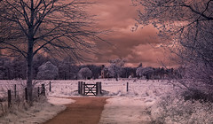Blickling Meadow (NGT Images) Tags: infra red ir blickling hall sg1 stargate creative colours pyramid