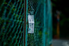 please take these pepper leaves (N.sino) Tags: m9 summicron90mm japanesepepper message fence 山椒の葉 山椒 深大寺 フェンス