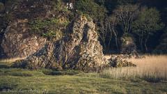 Lot's Wife - Another View (.Brian Kerr Photography.) Tags: scotland scottish scottishlandscapes scottishborders scotspirit sony southwick naturereserve nature naturallandscape natural dumfriesandgalloway dgwgo visitscotland landscapephotography light availablelight a7rii outdoor outdoorphotography photography photo photographer atmosphere scottishlandscape briankerrphotography briankerrphoto fe2470mmf28gm camera coastal coastline seascape grass reeds trees rocks