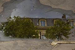 The persistence of water (Argiris Papaioannou) Tags: nikon d3300 france paris street streetphotography lake illusion reflection rain rainny walking trees sky reflect tree