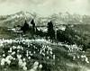 P1.WA1.008 (American Alpine Club Photo Library) Tags: thecastle pinnaclepeak plummerpeak denmanpeak tatooshrange mountrainiernationalpark unicornpeak stevenspeak