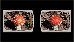 amanitamuscaria vr vrheadsetimage fungi 3d... (Photo: Brian Flint on Flickr)
