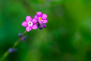 The Eye of the Flower