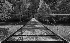 Over the River & Into the Woods (stephenstookeyphotography@gmail.com) Tags: mountrainiernationalpark mountrainier suspensionbridge river woods overtheriver ohanapecoshriver groveofthepatriarchs ominous fairytail forest trees swingingbridge cables cablebridge woodplanks riverrocks blackandwhitephotography firtrees douglasfir spruce sitkaspruce black white photography photos officeart findyourpark nationalparkservice stookey fineartphotography