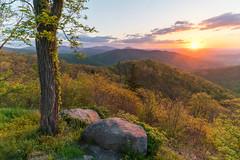 Shenandoah Spring    Buck Hollow Overlook, SNP, VA (Andrew Rhodes Photography) Tags: shenandoahnatlpark trees spring sunrise virginia buckhollowoverlook shenandoahnationalpark blueridgemountains nationalpark va