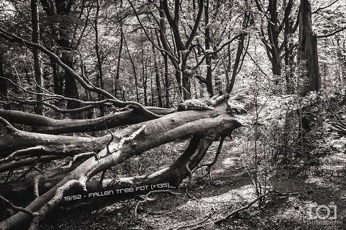 19/52 - Fallen Tree FDT (#135)