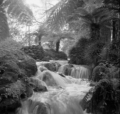 Water Feature (nfocalypse) Tags: 400tx hc110 yashicamat 124g yashicamat124g trix parqueterranostra azores portugal furnas