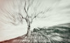 El recuerdo (Fortimbras) Tags: arbol tree tokinaaf1224mmf4 abstracto