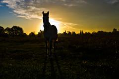 Corcel de tarde (Wal Wsg) Tags: corceldetarde caballo horse sunset tarde atardecer animal mundoanimal animalworld canoneosrebelt3
