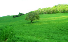 Marche, Italy - Countryside by Gianni Del Bufalo  CC BY 4.0