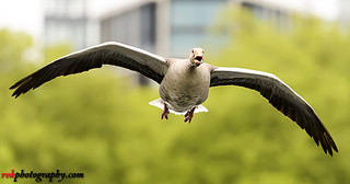 Wildlife Photoshoot @ Hyde Park, London
