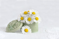 fresh as a... (Emma Varley) Tags: daisy stilllife pot green bunch white yellow indoor pretty fresh picked posy