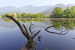 Reflection Landscape (Johnnie Shene Photography(Thanks, 2Million+ Views)) Tags: reflection landscape scenic scenery rural local regional lake water reservoir still stationary spring day tree trees branch wideangle mountain korea asia wiyangji photography horizontal outdoor colourimage fragility freshness nopeople foregroundfocus adjustment interesting awe wonder nature natural wild tranquility peace travel destination attraction landmark mirror contemplation bright shadow beautiful lighteffect sunlight sunny canon eos600d rebelt3i kissx5 sigma 1770mm f284 dc macro lens 반영 위양지 경남 호수 풍경 pond bigpond