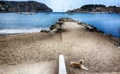 El vigilante de la playa (candi...) Tags: playaderepic playa arena perro agua montaña barcos cielo naturaleza nature sonya77 airelibre soller faro