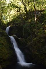 Dolgoch Waterfall, Snowdonia (Frightened Tree) Tags: le long exposure falls spring nikon d3300 1855 nd8 rhaeadr pistyll bistyll raeadr wales cymru snowdonia eryri cymraeg gymru gymraeg gogledd north
