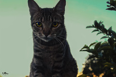 IMG_3853 (youaremybestangle) Tags: daily sunset skye sky nature animals cat babycat photographer photography amazing love