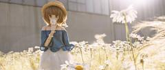 secret love (wing_nicole) Tags: volks dollfie dream 霧雨魔理沙 雛菊 デイジー daisy flower doll