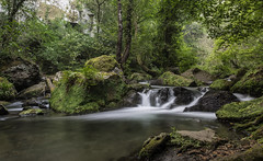 Treja (M.a.r.t.Y) Tags: treja river longexposition woods fall waterfall
