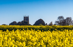 Church and a yellow field (Anthony White) Tags: marnhull england unitedkingdom gb blackmorevale northdorsetdistrict rapeseed oilseed bluesky church nopeople sony canola
