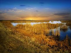 Fall wetlands (mrbillt6) Tags: northdakota landscape rural prairie wetlands grass fall ponds water outdoors country countryside golden