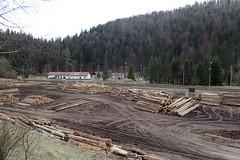 Traces de roues (8pl) Tags: scierie entrepôt bois forêt voiedechemindefer slovaquie červenáskala extérieur lampadaires terre talus tracesdepneus humide pistes eu
