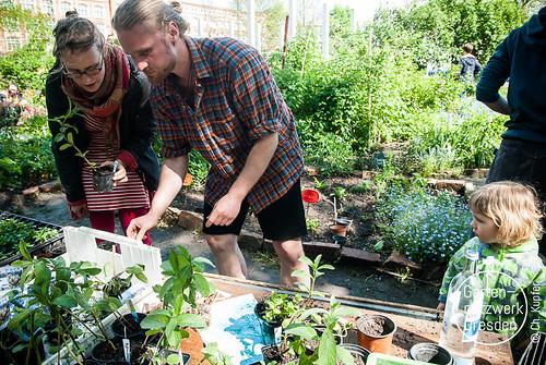 gardeningfromscratch_I_37