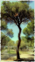 El PI - EL PINO - PINE. (Montse1957) Tags: vintage pino pine cielo cuadro pintura fresco parque parc park
